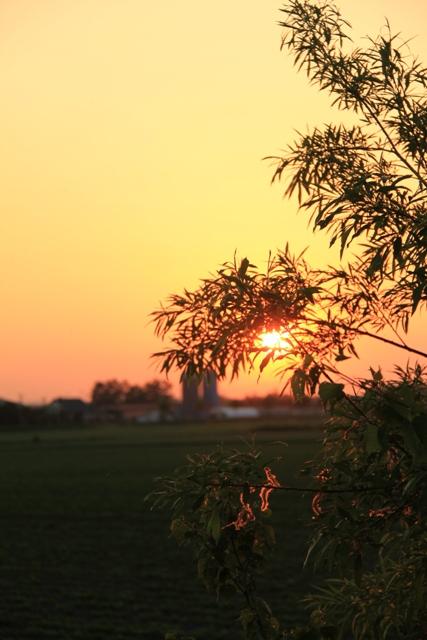 036木の間の夕日
