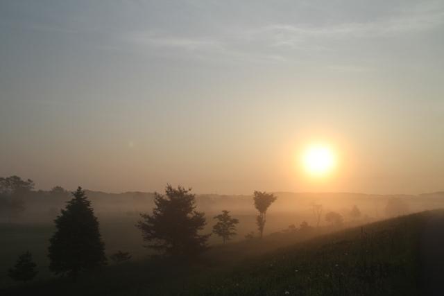 020太陽と整列した木々