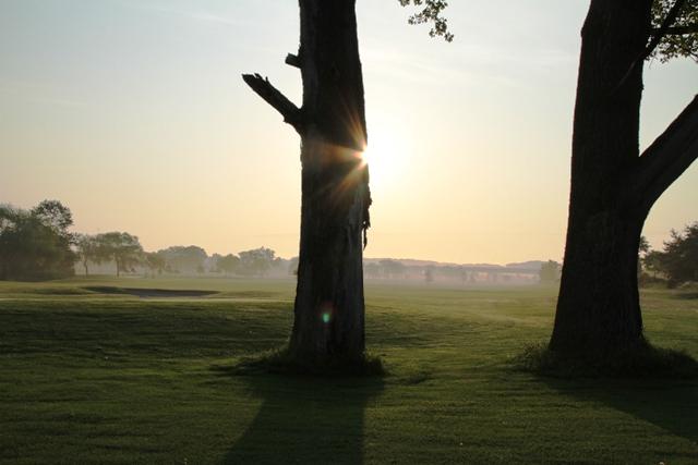 054木に太陽光線が