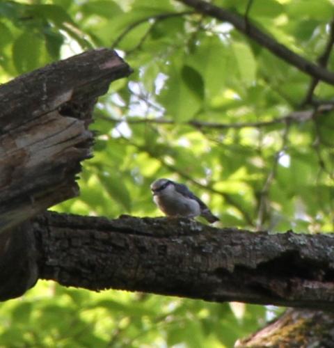 080音更神社の小鳥