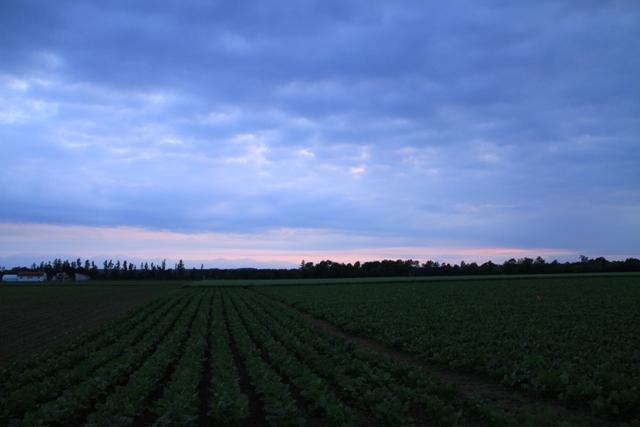 024畑と雲