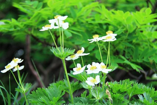 113白い花