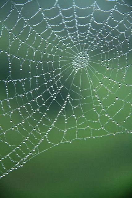 071蜘蛛の巣