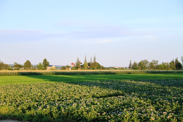 035ジャガイモ畑とサイロ