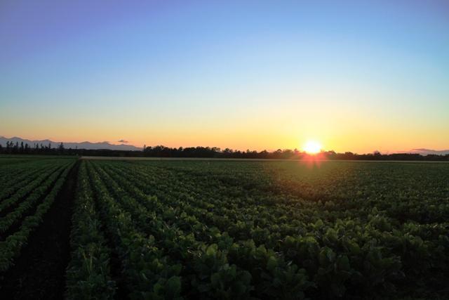 063畑を照らす夕日