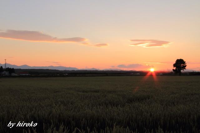 060小麦畑と夕陽