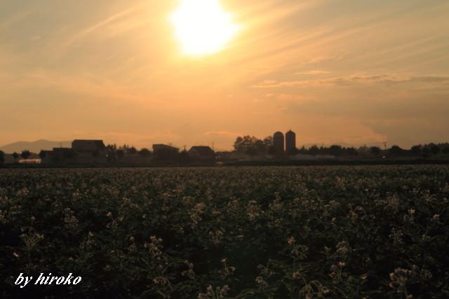034サイロとジャガイモ畑