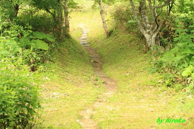232キレイに刈られた登山道