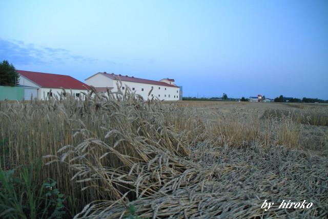 051小麦の乾燥工場