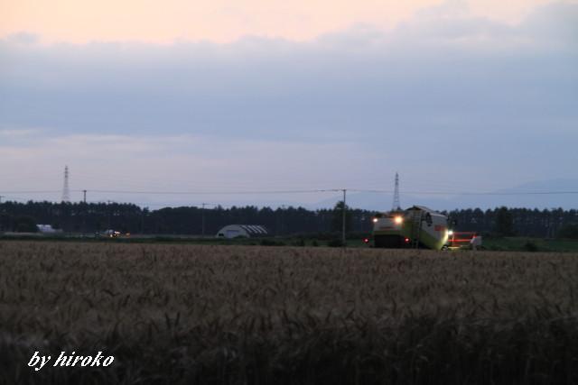 060小麦の収穫中JPG