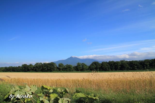 133斜里岳と小麦畑