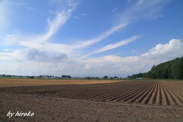 032ジャガイモ畑