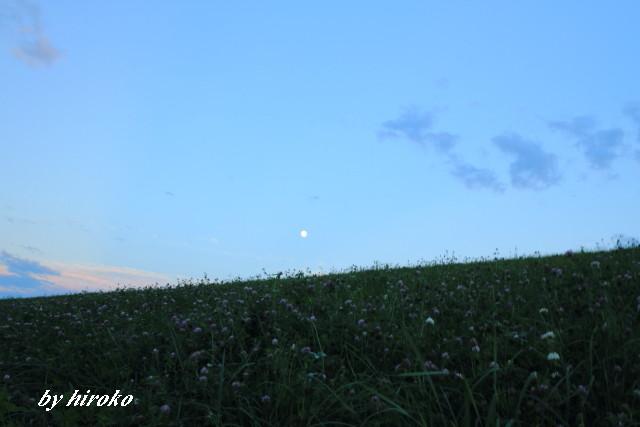 135アカツメ草とお月さん