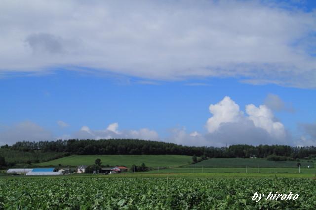 016ビート畑.と丘陵地帯JPG