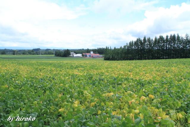 044黄葉し始めた豆畑