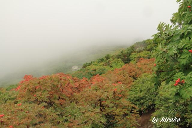 207登山道にはナナカマドが色づいて