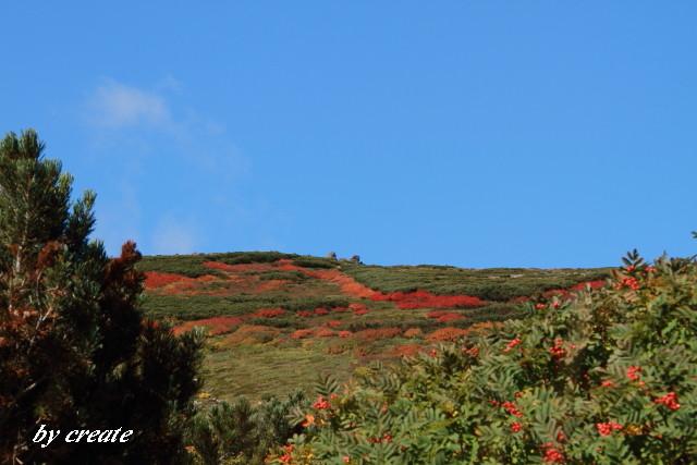 092ナナカマドの紅葉の斜面