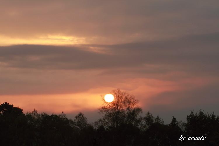 174グラデーションの木と朝日