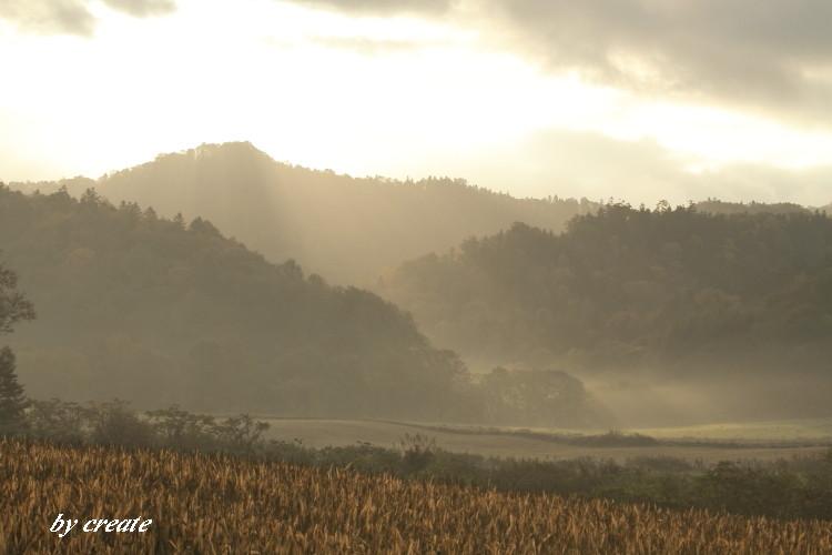 228デントコーン畑と光芒