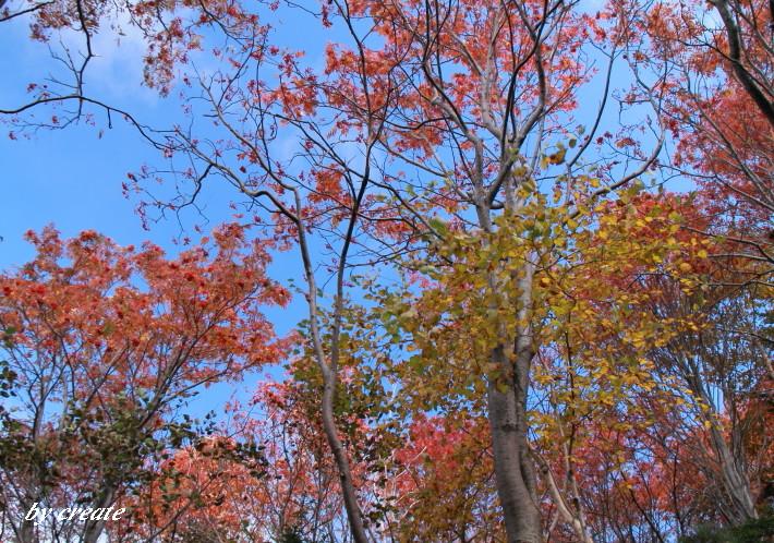 485青空に映える紅葉や黄葉
