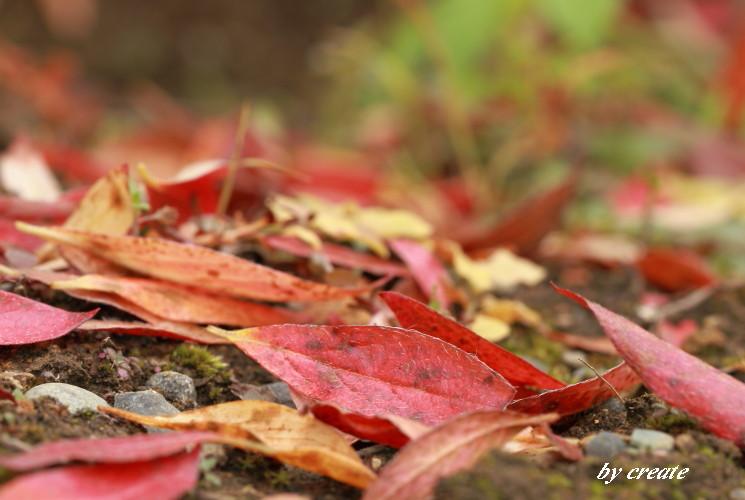 001庭の落ち葉