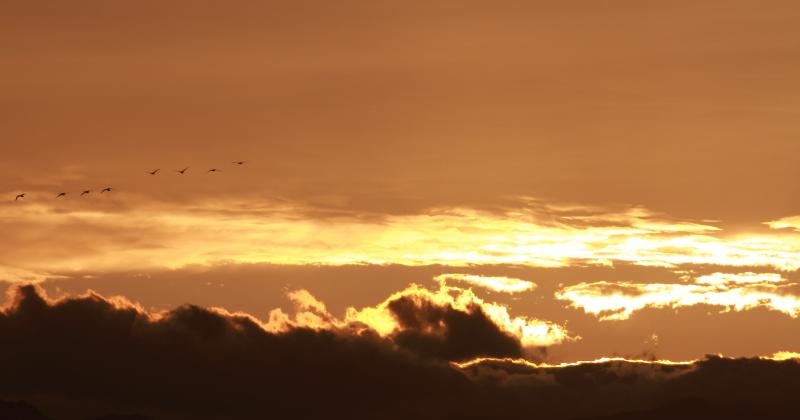 021夕景と白鳥