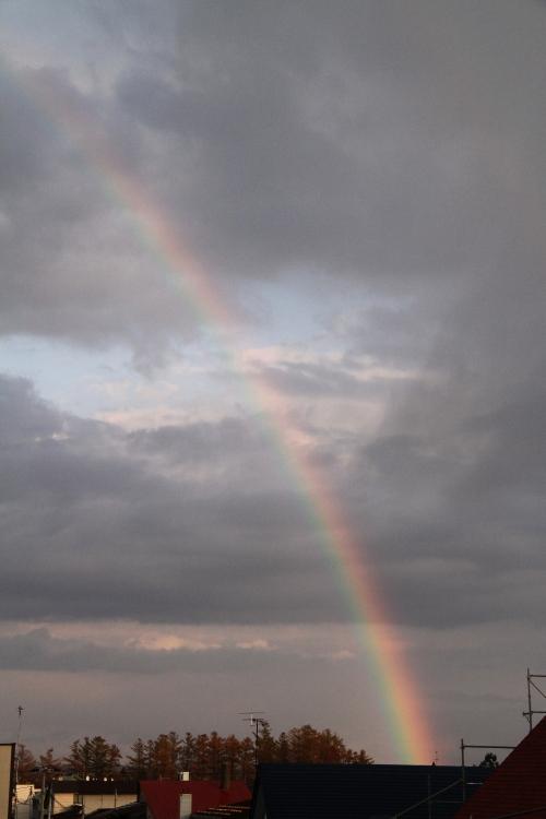 DPP 668 今日の虹0001