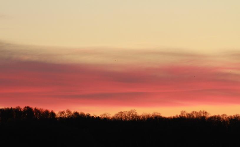 DPP 034 帯状に染まる雲と木々0001