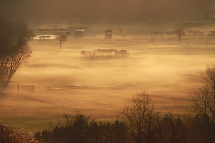 DPP 141黄金色に染まる地霧0001