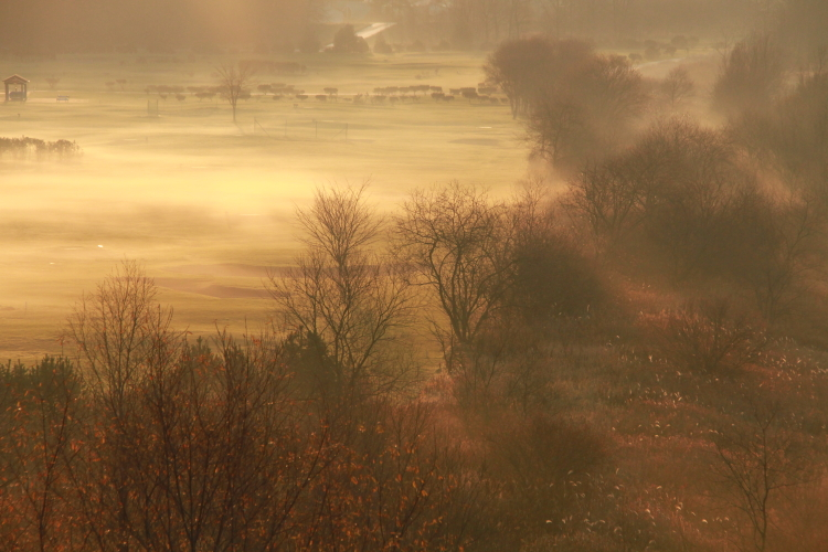 DPP 143黄金色に染まる地霧0001