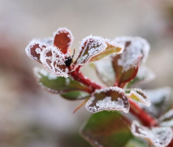 DPP 045 紅葉と霜の花0001