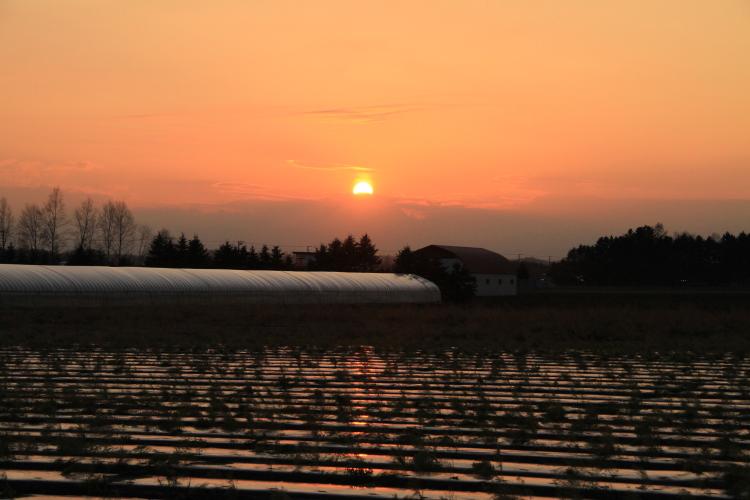 232夕日に染まる畑のビニール