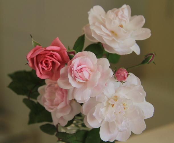 009庭に咲いたバラ