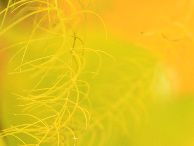 DPP 011 アスパラの葉黄0001