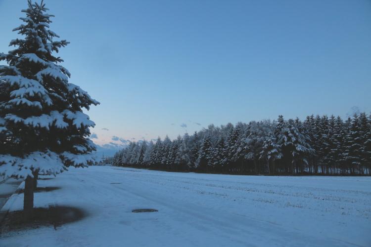 DPP 052 天然のクリスマスツリー0001