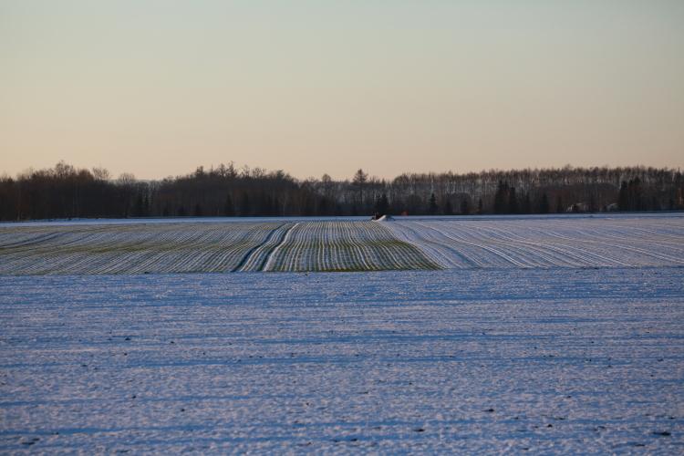 DPP 064 雪に覆われた畑0001
