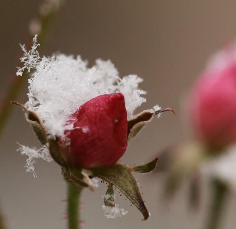 DPP 088 雪の結晶のお飾り0001