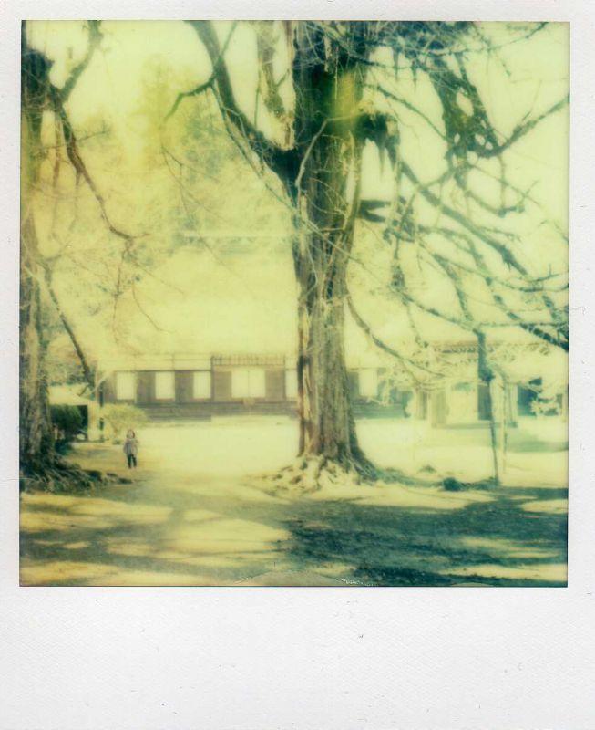 マーブル1時間旅行Polaroid SX-70 or SLR (ALFA1)