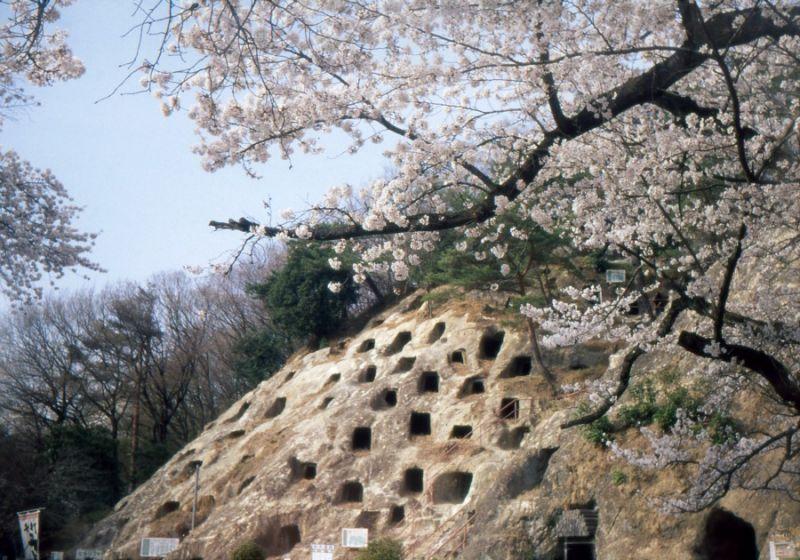 zapan2桜と百穴LOMO SMENA 8 (FUJIFILM PROVIA 400X)