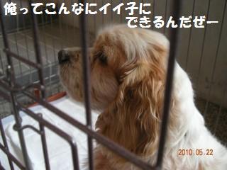 DSCN1061re.jpg