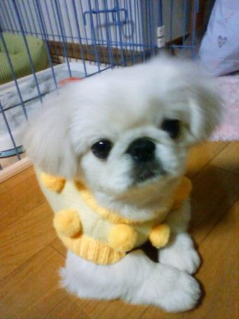 yuki_convert_20110127135629.jpg