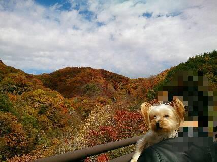 2014.紅葉と散歩1