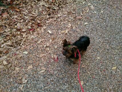 2014.紅葉と散歩4