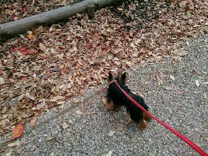 2014,紅葉と散歩5