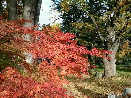 2014.紅葉と散歩7