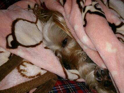 14.11寒い季節は毛布にくるまり寝るに限る?!2