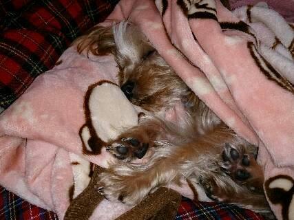 14.11寒い季節は毛布にくるまり寝るに限る?!3