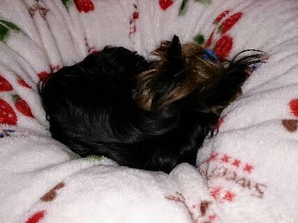 14.11寒い季節は毛布にくるまり寝るに限る?!5