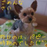 2012-01-18_101556decr.jpg