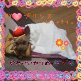 2012-02-08_230811decr.jpg